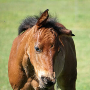 Common Equine Issues